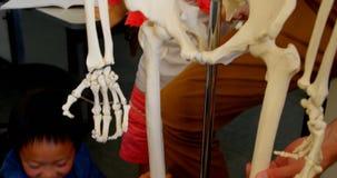crian?as Multi-?tnicas da escola que fixam o modelo de esqueleto na sala de aula na escola 4k video estoque