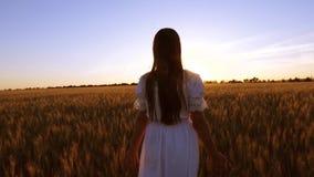 Crian?a feliz que anda no campo a menina feliz anda atrav?s do campo com as orelhas amarelas do trigo e do trigo dos toques com s video estoque