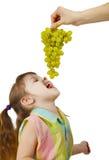 A criança alegre come uvas das mãos parentais Imagem de Stock Royalty Free