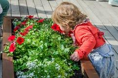 Criança bonita nova da menina, criança que joga na rua da cidade antiga perto dos canteiros de flores com flores vermelhas, alegr Fotografia de Stock