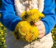 Criança que guarda flores amarelas do dente-de-leão Imagens de Stock Royalty Free