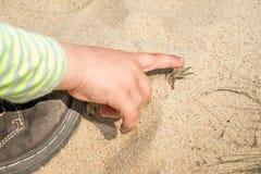 A criança toca em uma planta do dedo Foto de Stock