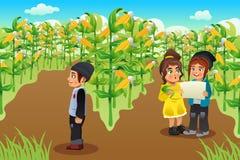 Crianças em um campo de milho Imagens de Stock