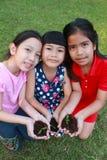 Crianças que guardam a planta nova da plântula nas mãos Foto de Stock Royalty Free