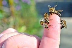 Crianza de abejas y de la producción de la miel Imagenes de archivo