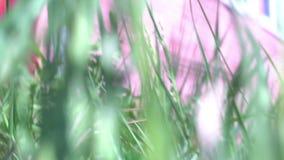 Criatura animal pequena que corre através de uma grama que dá uma corrida através da fuga - ponto de vista do POV video estoque