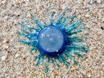 Criatura azul não identificada no Sandy Beach imagem de stock royalty free