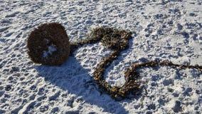 Criatura da alga Imagem de Stock Royalty Free