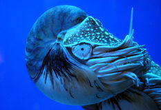 Criatura del océano imágenes de archivo libres de regalías