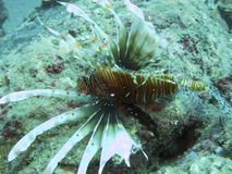 Criatura do mar e recife coral Imagem de Stock Royalty Free