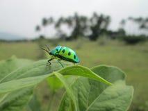 Criatura linda en verde es muy famoso en mi niñez pero falto ahora él pero todavía es amado por los niños Foto de archivo