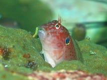 Criatura marinha incomun do mar fotografia de stock