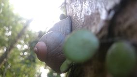 Criatura natural en Sri Lanka fotos de archivo