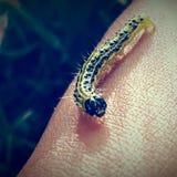 Criatura pequena minúscula Fotografia de Stock Royalty Free