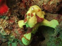 Criatura subacuática Fotos de archivo libres de regalías
