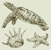 Criaturas del mar Imagen de archivo