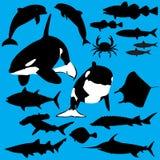 Criaturas do mar Fotografia de Stock Royalty Free