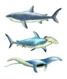 Criaturas do mar Imagens de Stock Royalty Free
