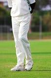 Cricket #2 Royalty Free Stock Photo