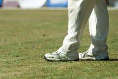 Cricket Royalty Free Stock Photos