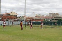 Cricket image stock