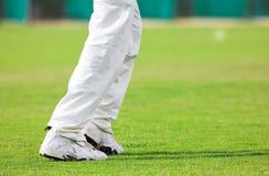 Cricket #3 Royalty Free Stock Photography