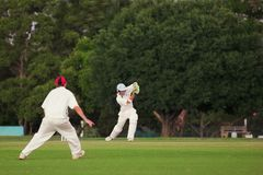 Cricket #5 Royalty Free Stock Images