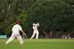 Cricket #5 Images libres de droits