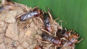 cricket clips vidéos