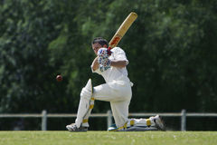 Cricket Royalty Free Stock Photo
