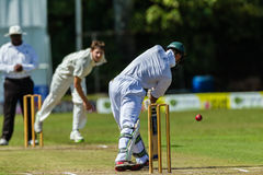 Cricket Action Sport Royalty Free Stock Images