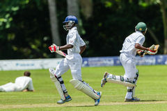 Cricket Action Sport Stock Photos