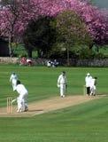 Cricket anglais photos stock