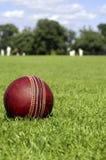 cricket bal gracze Obraz Stock