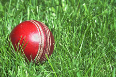 Cricket ball. Worn cricket ball lying in long green grass Royalty Free Stock Images