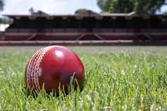 Cricket ball. Stock Photos