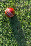 Cricket Ball On Grass Royalty Free Stock Photography