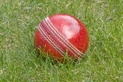 Cricket ball in the grass. Close up of cricket ball in the grass at test match stock image