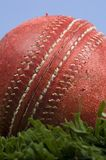 Cricket ball on grass with blue sky. Cricket ball on grass and a blue sky stock images