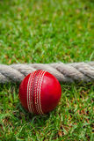 Cricket Ball. On grass field four runs stock images