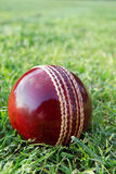 Cricket ball on green grass. Stock Photography