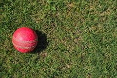 Cricket  ball on a green grass. Cricket equipment isolated on a green background. Cricket halmet bat ball isolated green grass batsman bowler worldcup royalty free stock photos