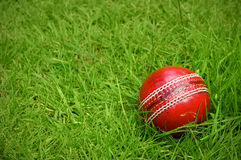 Cricket ball on green grass pitch Stock Photo