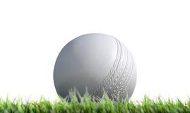 Cricket Ball Resting On Grass Stock Photos