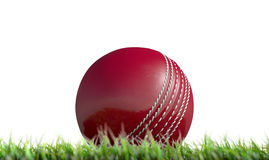 Cricket Ball Resting On Grass Royalty Free Stock Photography