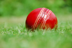 Cricket ball waits for summer Royalty Free Stock Images