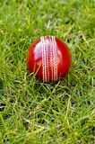 cricket de bille Images stock