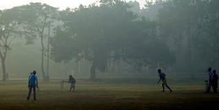 Cricket de matin photographie stock libre de droits