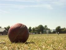 Cricket de village Photographie stock libre de droits