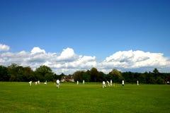 cricket den engelska matchbyn Royaltyfri Foto